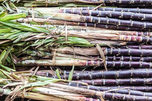 Sugar Cane「Close-up of sugar cane stalks」:スマホ壁紙(19)