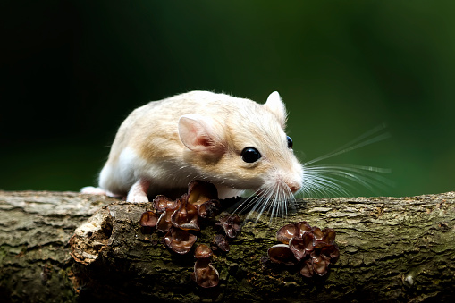 Gerbil「Close-up of a gerbil on a tree trunk, Indonesia」:スマホ壁紙(19)