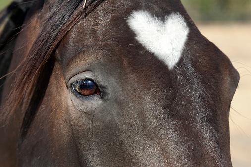 Horse「Closeup of a horse」:スマホ壁紙(18)
