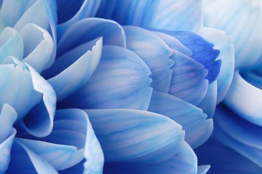 Fragility「Close-up of Blue Flower Petals」:スマホ壁紙(16)