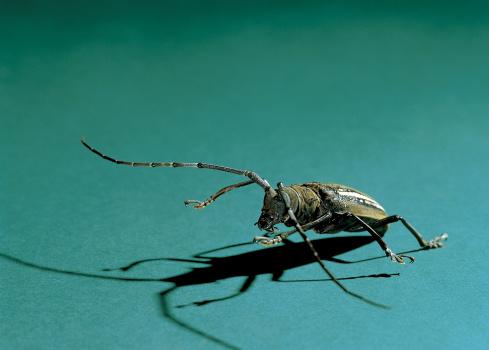 Ugliness「Close-up of a beetle」:スマホ壁紙(9)