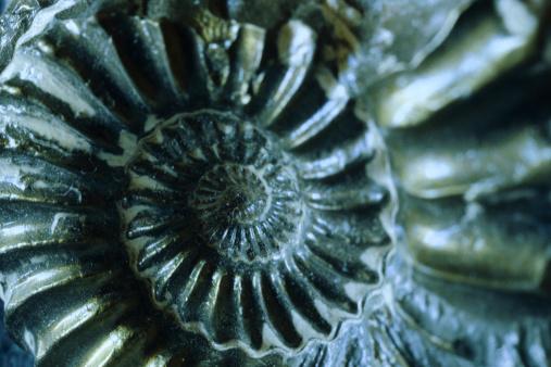 snails「Close-up of shell」:スマホ壁紙(17)