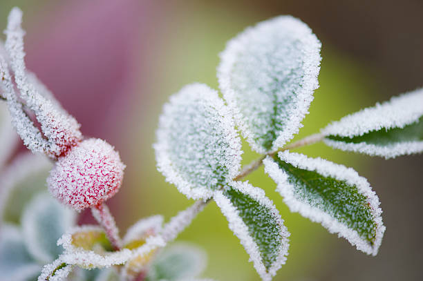 Close-up of frost on plant leaves in the Fall:スマホ壁紙(壁紙.com)