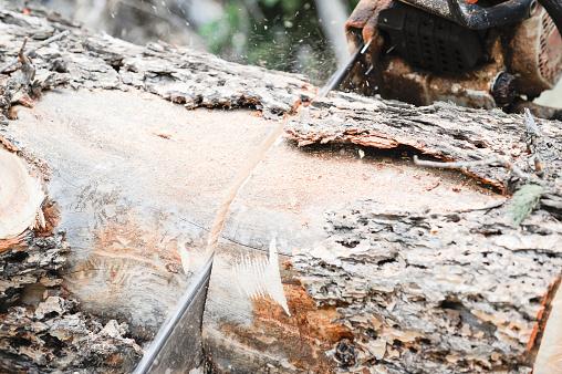 Deforestation「Close-up of chainsaw Cutting wood」:スマホ壁紙(4)