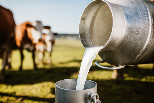 Dairy Cattle「Close-up of raw milk being poured into container」:スマホ壁紙(9)