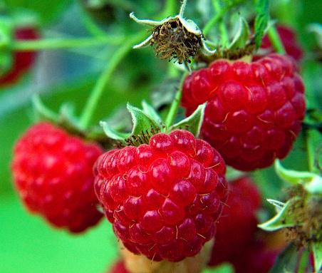 Raspberry「Close-up of raspberries」:スマホ壁紙(1)
