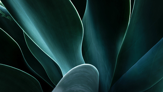 葉「Close-up of an agave plant, America, USA」:スマホ壁紙(15)