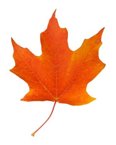 紅葉「Closeup of an autumn leaf」:スマホ壁紙(13)