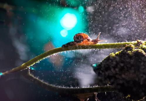 snails「Close-up of snail」:スマホ壁紙(17)