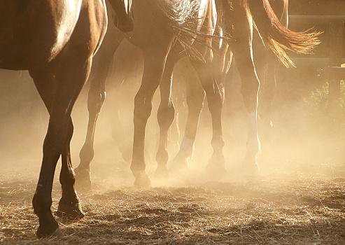 Horse「Close-up of horses legs」:スマホ壁紙(8)