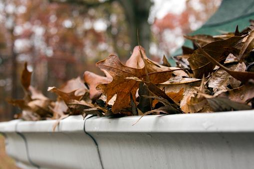 Gutter「Close-up of dead leaves overflowing a gutter」:スマホ壁紙(14)