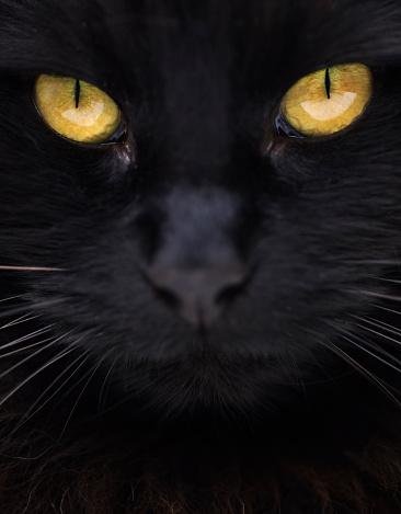 black cat「Close-up of black cat with yellow eyes」:スマホ壁紙(8)