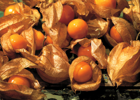 Chinese Lantern「close-up of pile of tropical berries」:スマホ壁紙(2)