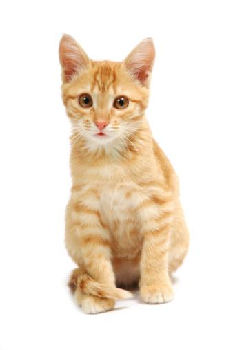 Kitten「ジンジャーキトン」:スマホ壁紙(9)
