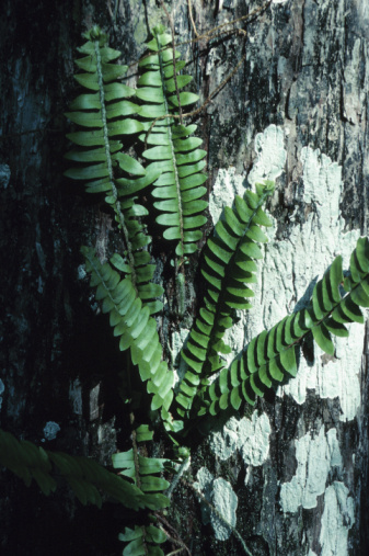 Frond「Close-up of a fern growing on a tree」:スマホ壁紙(3)