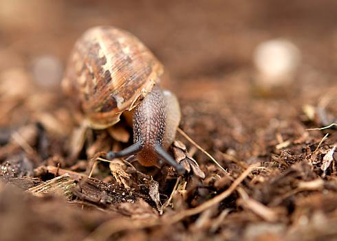 snails「Close-up of a snail」:スマホ壁紙(10)
