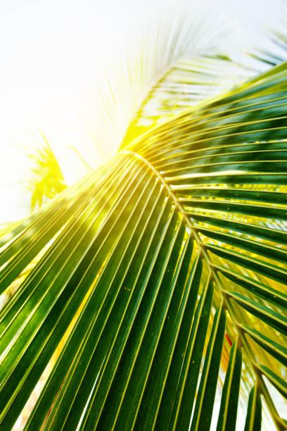 Close-up of a palm tree leaf, Maldives:スマホ壁紙(壁紙.com)