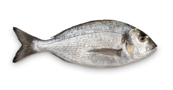 Fish「Close-up of fresh Sea Bream against white background」:スマホ壁紙(7)