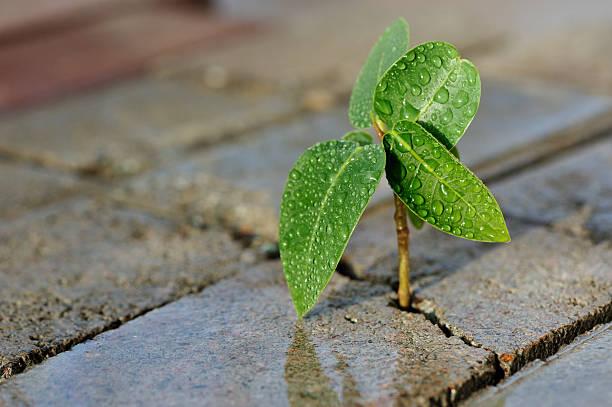Close-up of a small plant growing through bricks:スマホ壁紙(壁紙.com)