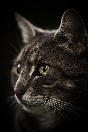 Mixed-Breed Cat「Close-up of a cute cat」:スマホ壁紙(14)