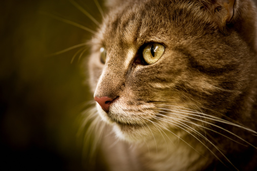 Mixed-Breed Cat「Close-up of a cute cat」:スマホ壁紙(6)