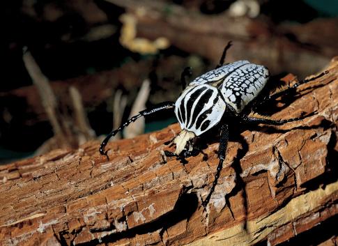 Ugliness「Close-up of a beetle on a log of wood」:スマホ壁紙(11)