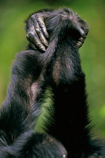 Animal Arm「Close-up of Chimpanzees Holding Hands」:スマホ壁紙(11)