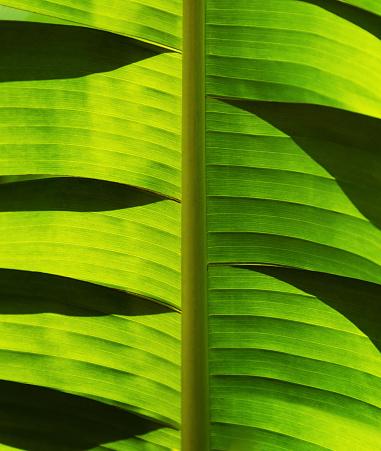Palm tree「Close-up of palm leaf」:スマホ壁紙(15)