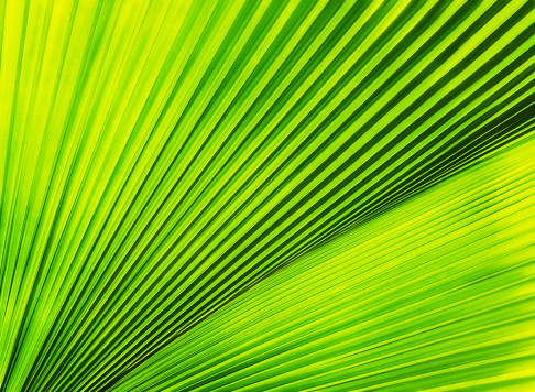 Fan Palm Tree「Close-up of palm leaf」:スマホ壁紙(11)