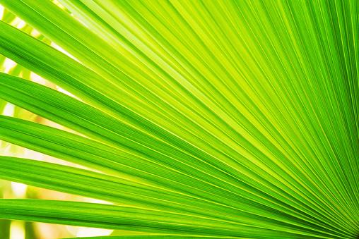 Palm tree「Close-up of palm leaf」:スマホ壁紙(10)