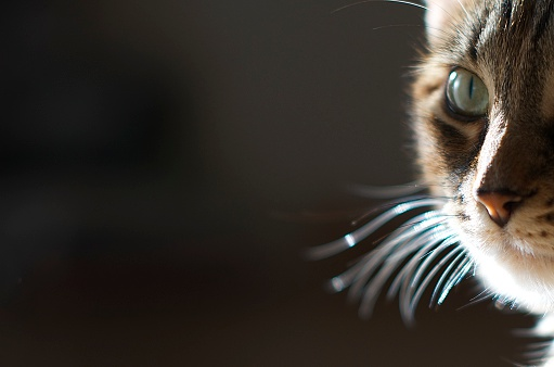 Unrecognizable Person「Close-up of cat's face」:スマホ壁紙(10)