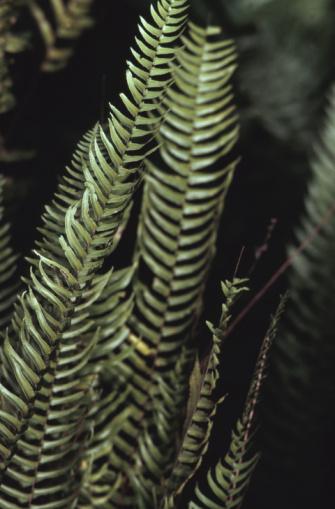 Frond「Close-up of fern pron」:スマホ壁紙(3)