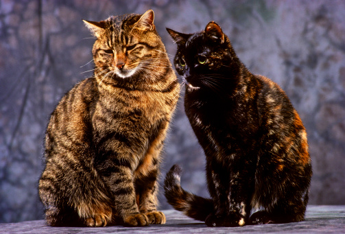 Males「Close-up of two cats」:スマホ壁紙(17)