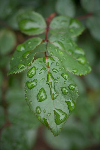 Selective Focus「Close-up of wet leaves」:スマホ壁紙(9)
