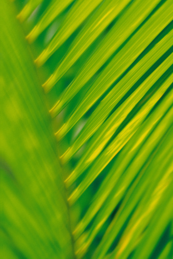 Frond「Close-up of palm frond」:スマホ壁紙(13)