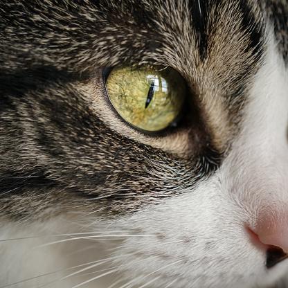 Kitten「Close-up of a cats eye」:スマホ壁紙(2)