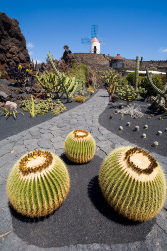 Lava「A closeup of some cacti on a cobblestone road」:スマホ壁紙(12)
