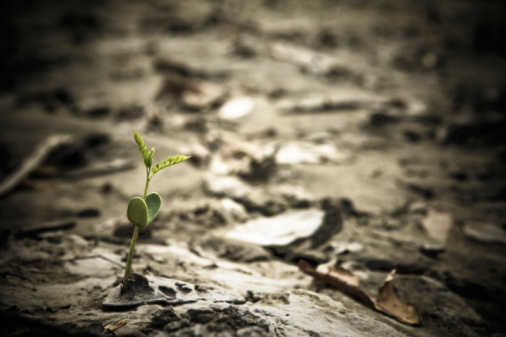 Buenos Aires「Close-up of a sprout growing on the dry riverbed, Parque Pereyra Iraola, Buenos Aires, Argentina」:スマホ壁紙(1)