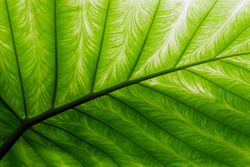 Rippled「Close-up of a bright green palm leaf」:スマホ壁紙(14)