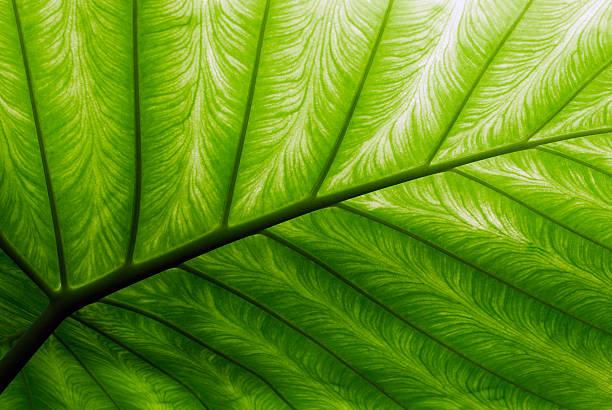 Close-up of a bright green palm leaf:スマホ壁紙(壁紙.com)