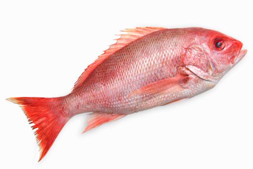 大昔の「Close-up of a snapper fish」:スマホ壁紙(7)