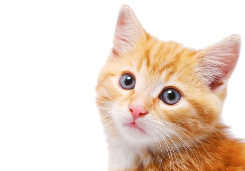 Kitten「close-up of a kittens face」:スマホ壁紙(14)