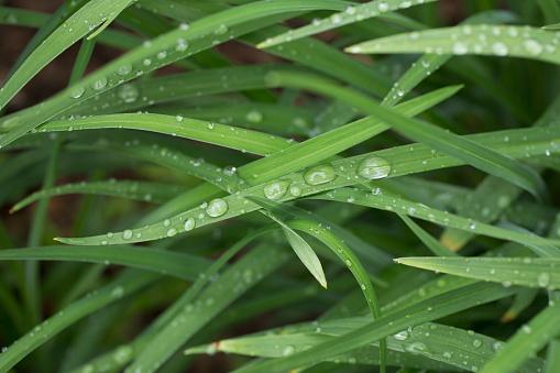 雨「Close-up of raindrops on grass」:スマホ壁紙(8)