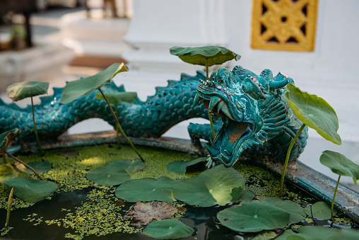 Dragon「Close-up of a dragon sculpture by a pond, Bangkok, Thailand」:スマホ壁紙(10)