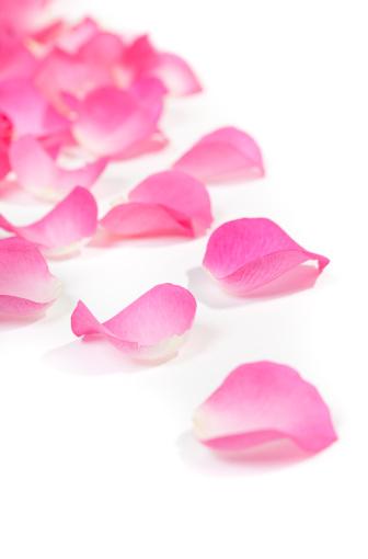 薔薇「Close -up of バラの花びら、ホワイト」:スマホ壁紙(7)