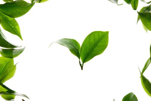 茶葉「Close-up of tea leaves」:スマホ壁紙(11)