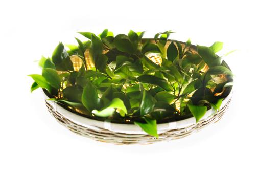 緑茶「Close-up of tea leaves」:スマホ壁紙(15)