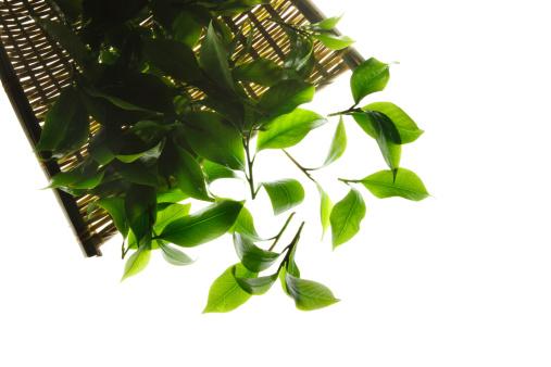 茶葉「Close-up of tea leaves」:スマホ壁紙(15)