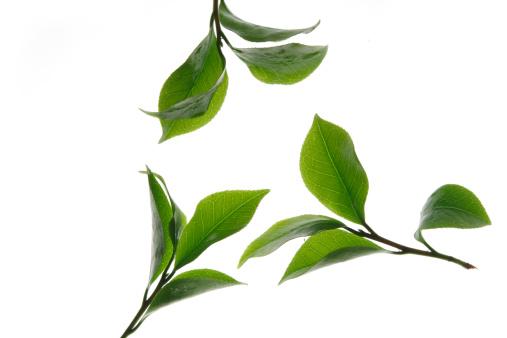 緑茶「Close-up of tea leaves」:スマホ壁紙(4)