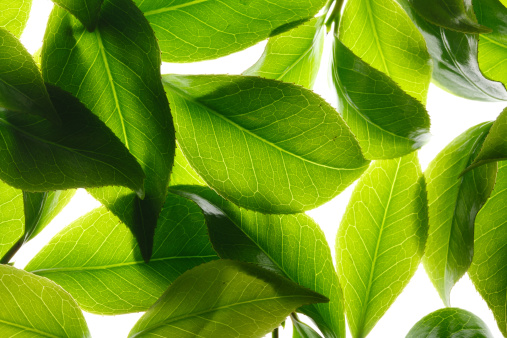 茶葉「Close-up of tea leaves」:スマホ壁紙(17)